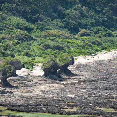 「徳之島の奇岩」の写真素材