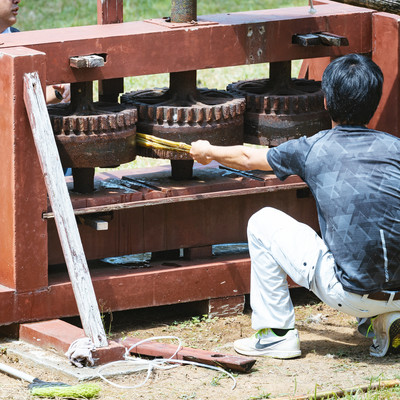 「昔のサトウキビ圧搾機」の写真素材