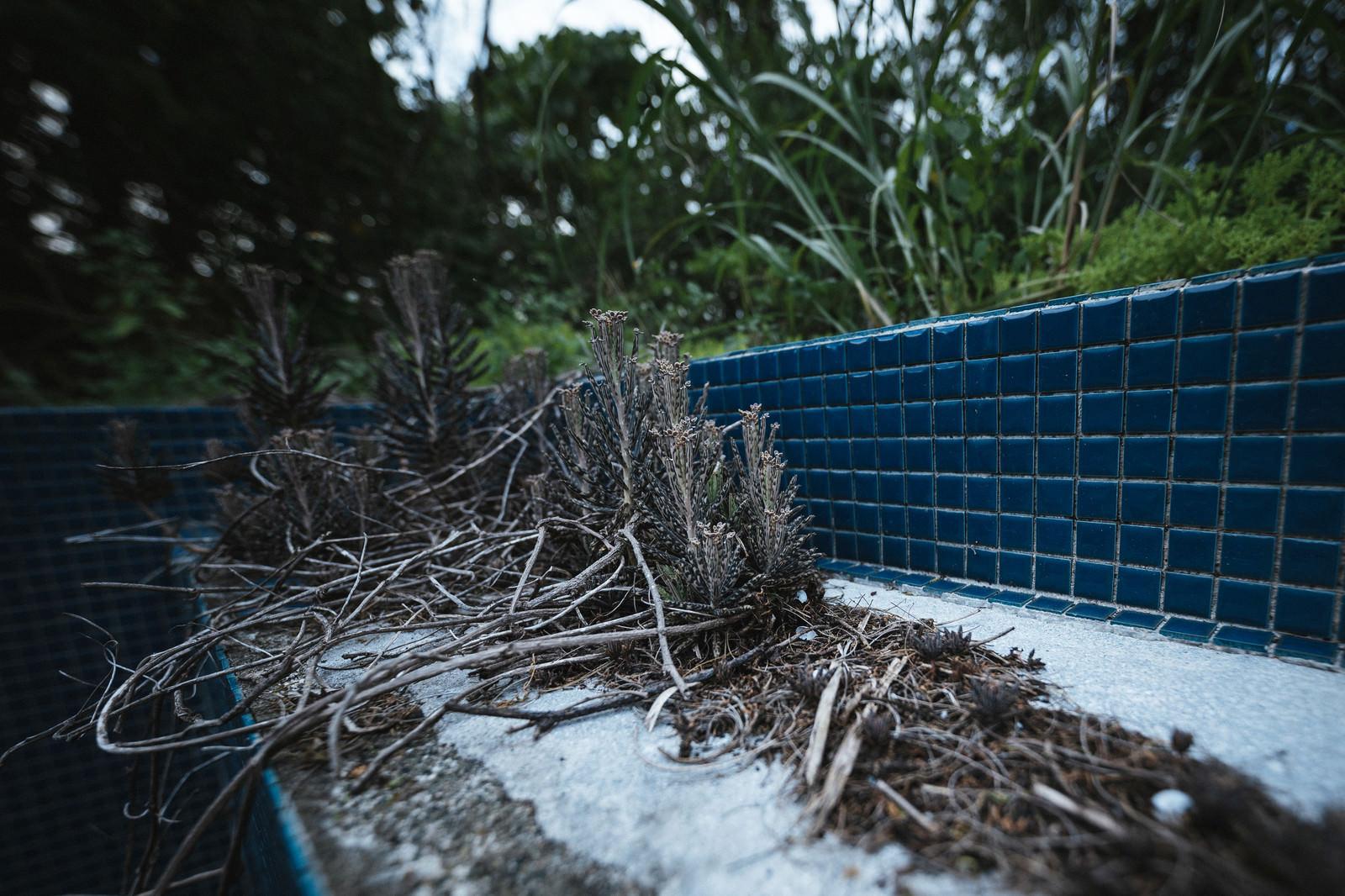 「廃墟に生える雑草」の写真