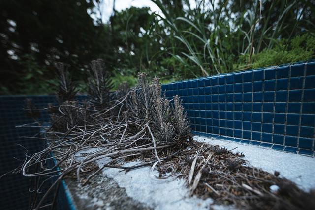廃墟に生える雑草の写真