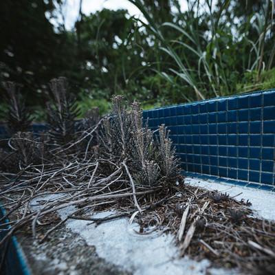 「廃墟に生える雑草」の写真素材