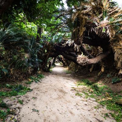 ソテツの群生でできた「金見崎ソテツトンネル」の写真