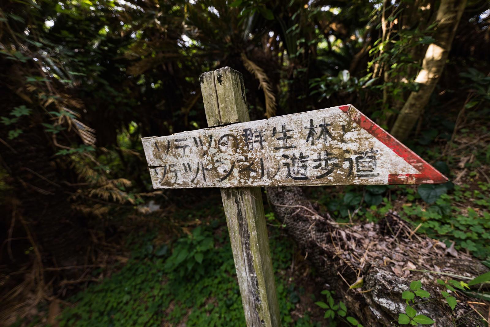 「「ソテツの群生林とソテツトンネル遊歩道」と書かれた道標」の写真