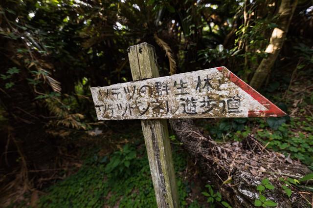 「ソテツの群生林とソテツトンネル遊歩道」と書かれた道標の写真