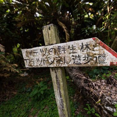 「「ソテツの群生林とソテツトンネル遊歩道」と書かれた道標」の写真素材