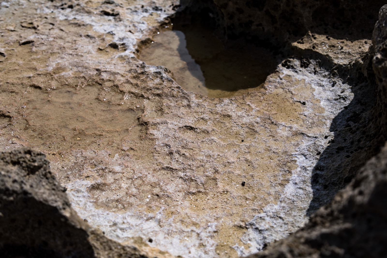 「干潟で乾燥した天然塩の結晶」の写真