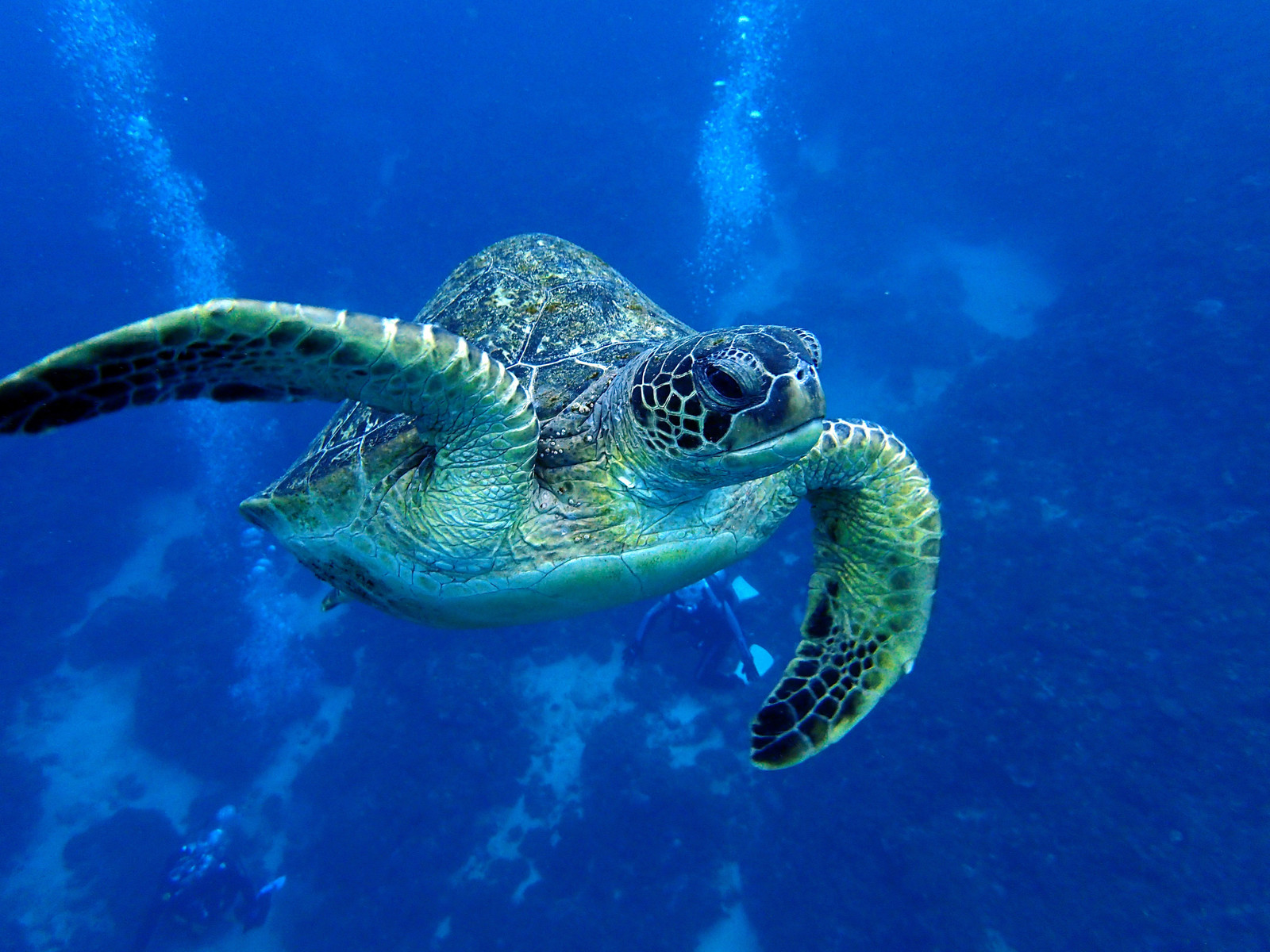 「海中を泳ぐウミガメ」の写真