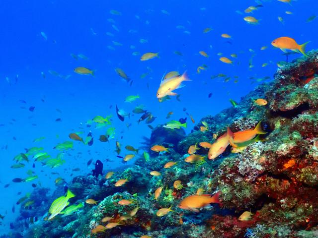 徳之島の熱帯魚の写真