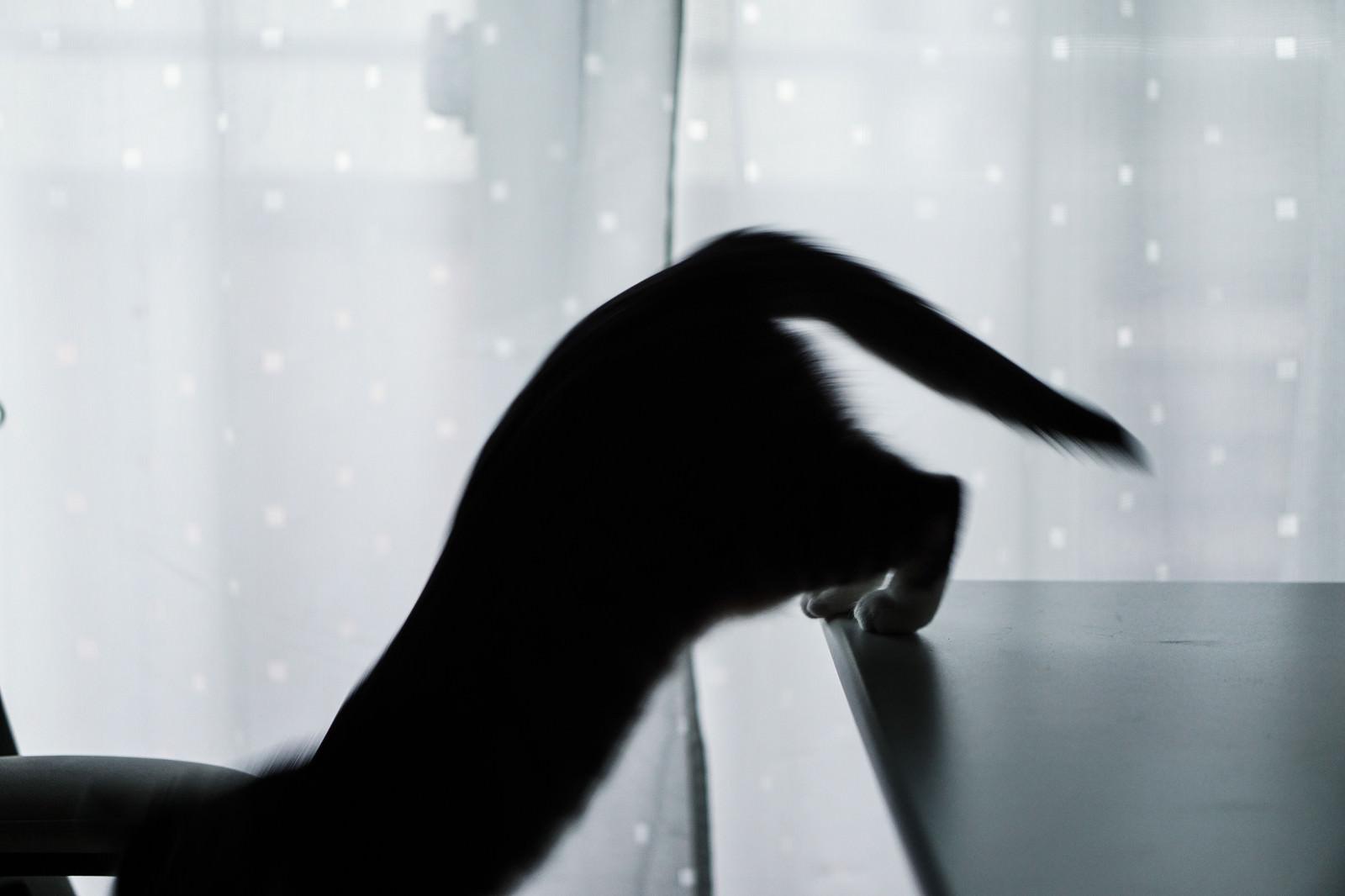 「湾曲猫尻」の写真