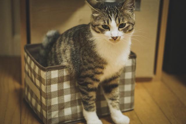猫ボックスに箱入りの写真
