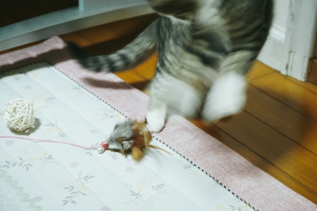 ぶったまげ猫の写真
