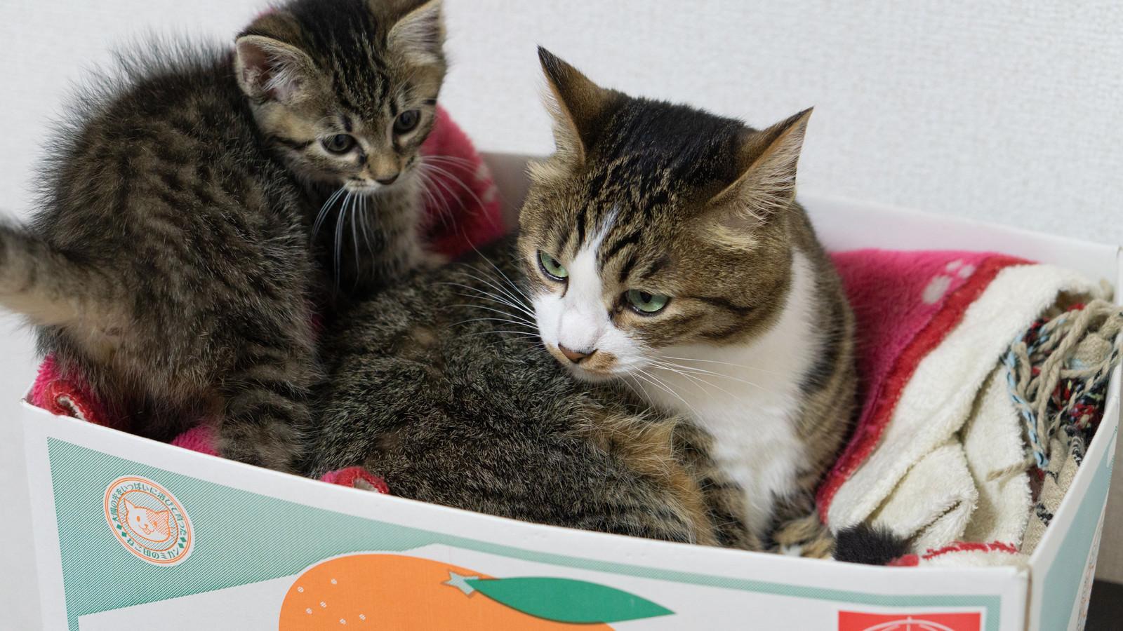 「猫ボックス家族用」の写真