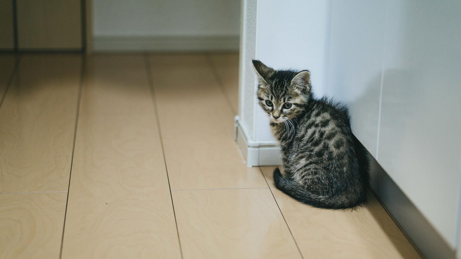 「すみっこの子猫」の写真