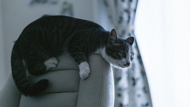 ソファーが傷だらけの理由は猫の写真