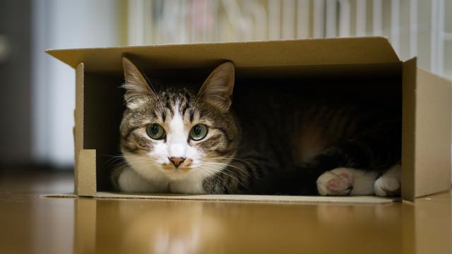 狭い空間は落ち着くニャン(猫)の写真