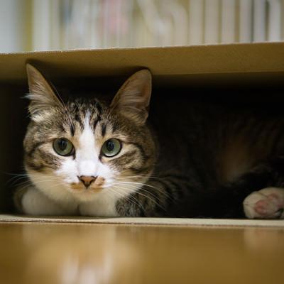 「狭い空間は落ち着くニャン(猫)」の写真素材