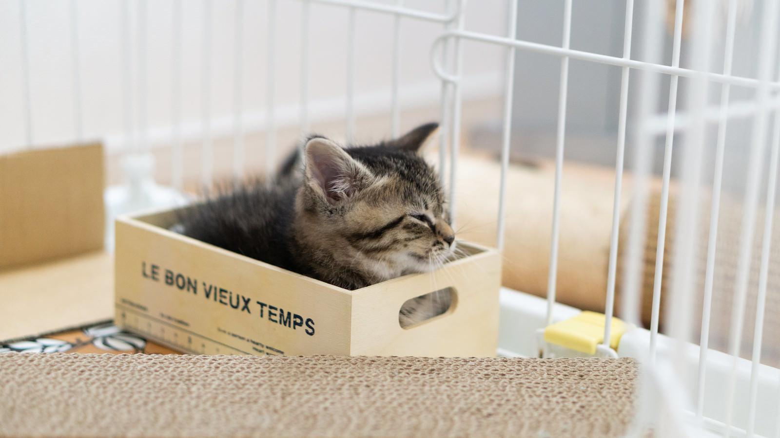 「小さいボックスに入る子猫」の写真