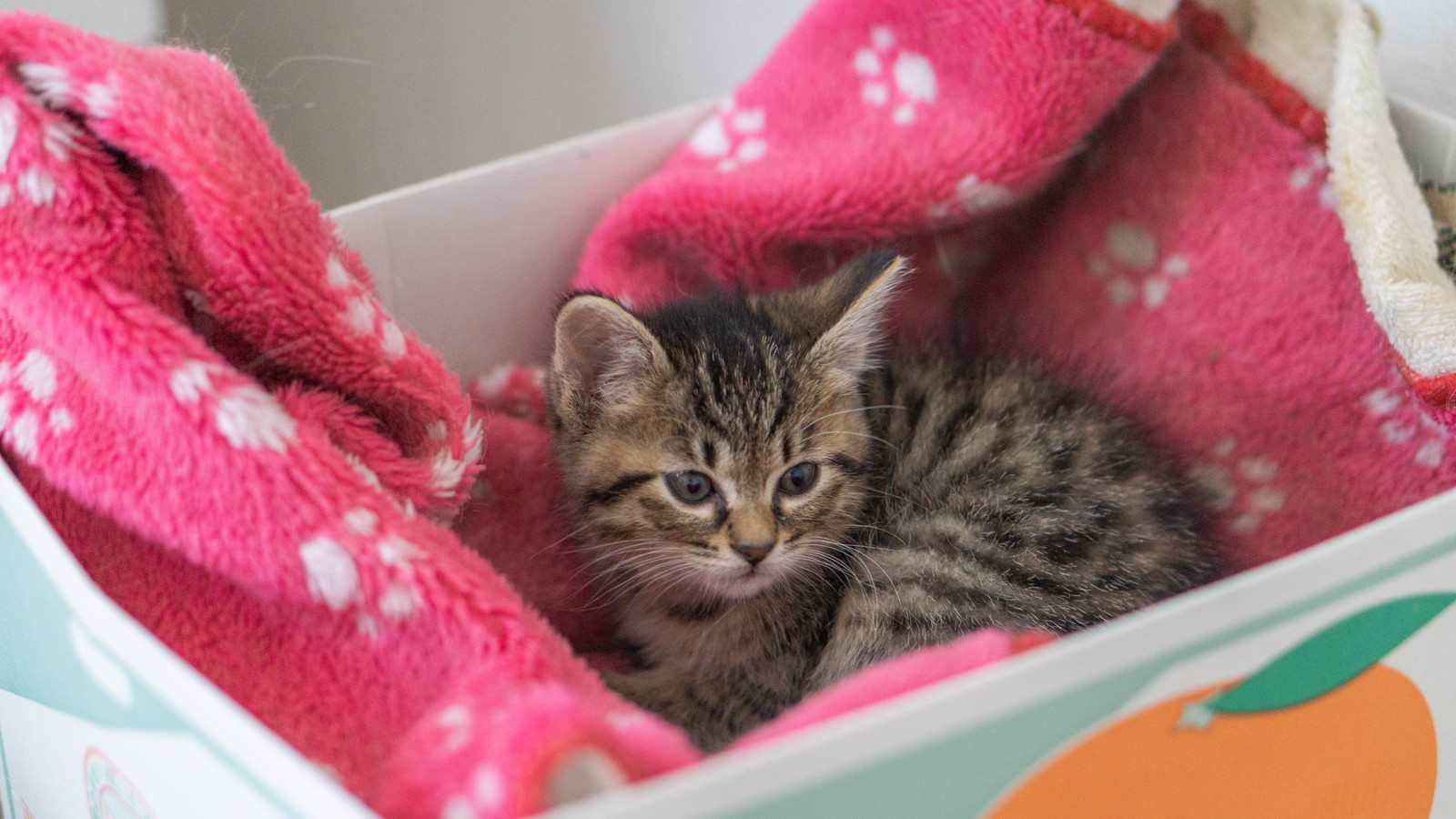 「みかん箱の猫ちゃん」の写真