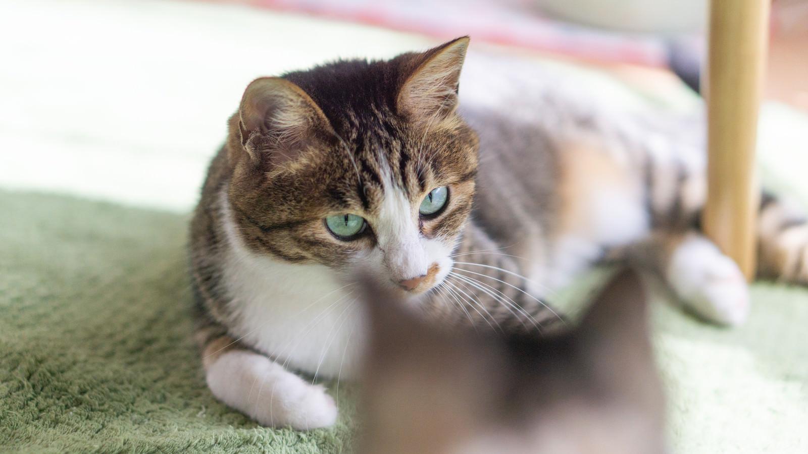 「親猫に睨まれる子猫」の写真