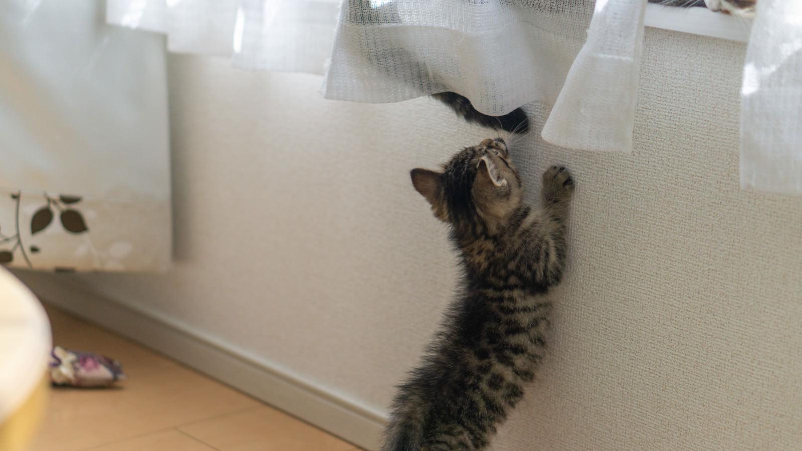 「親猫のように窓際に乗りたい子猫」の写真