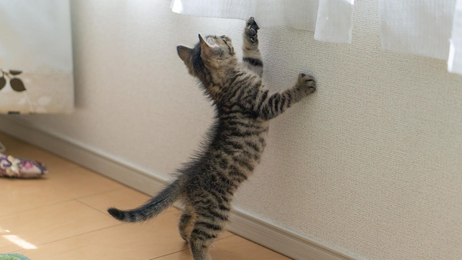 「外の様子が気になる子猫ちゃん」の写真