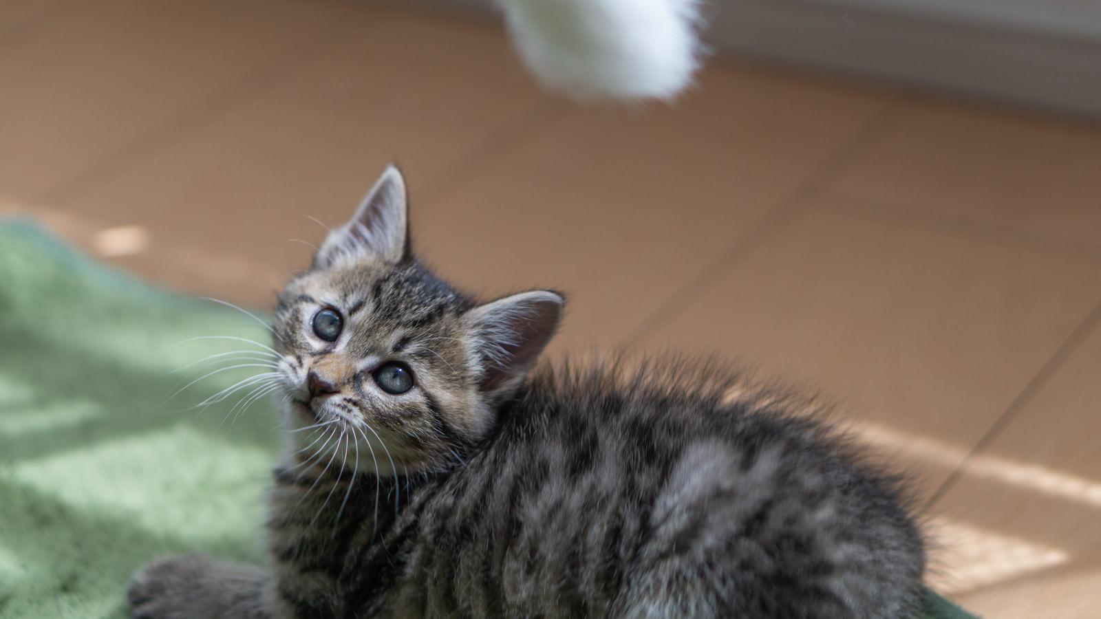 「子猫の気を引く」の写真