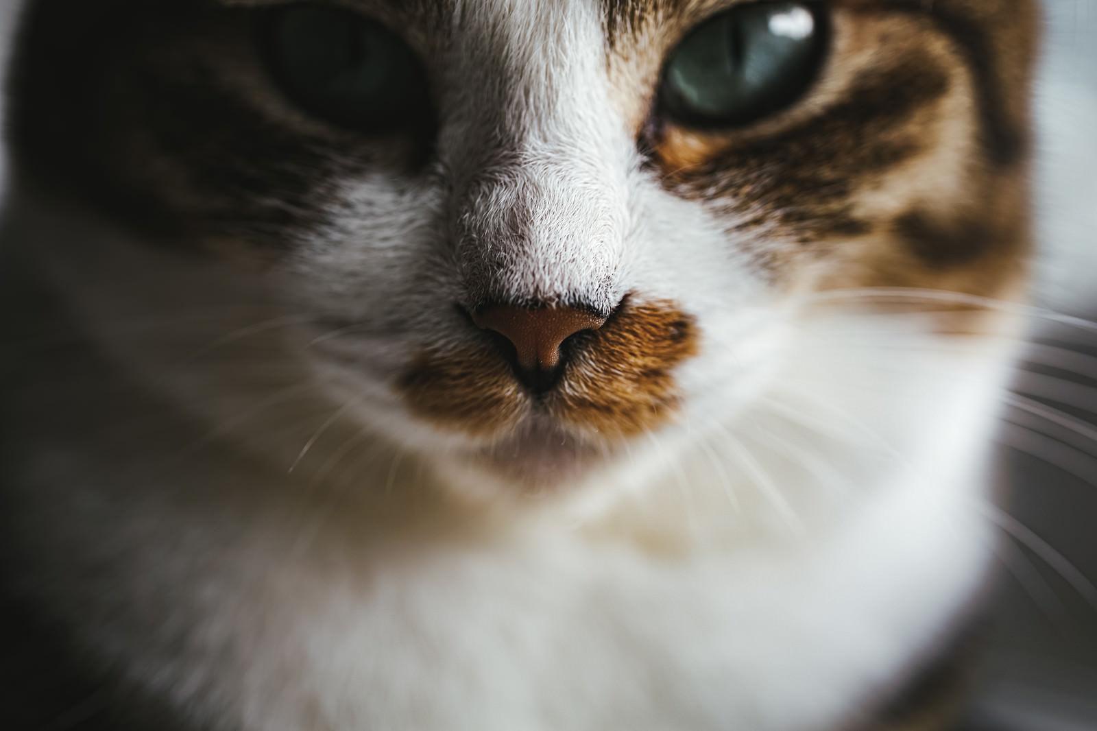 「クソリプに対する冷静な猫さん」の写真