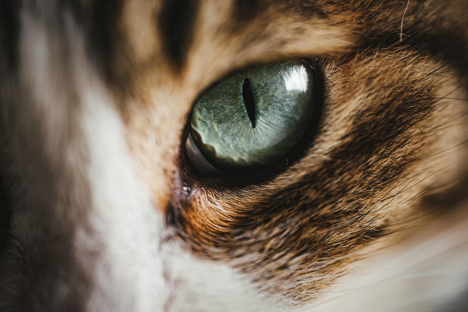 「猫目」の写真