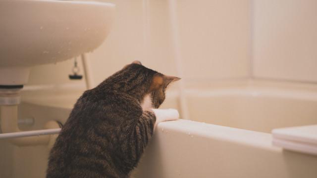 浴槽にお湯が溜まっていくにゃーの写真