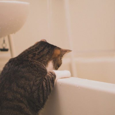 「浴槽にお湯が溜まっていくにゃー」の写真素材