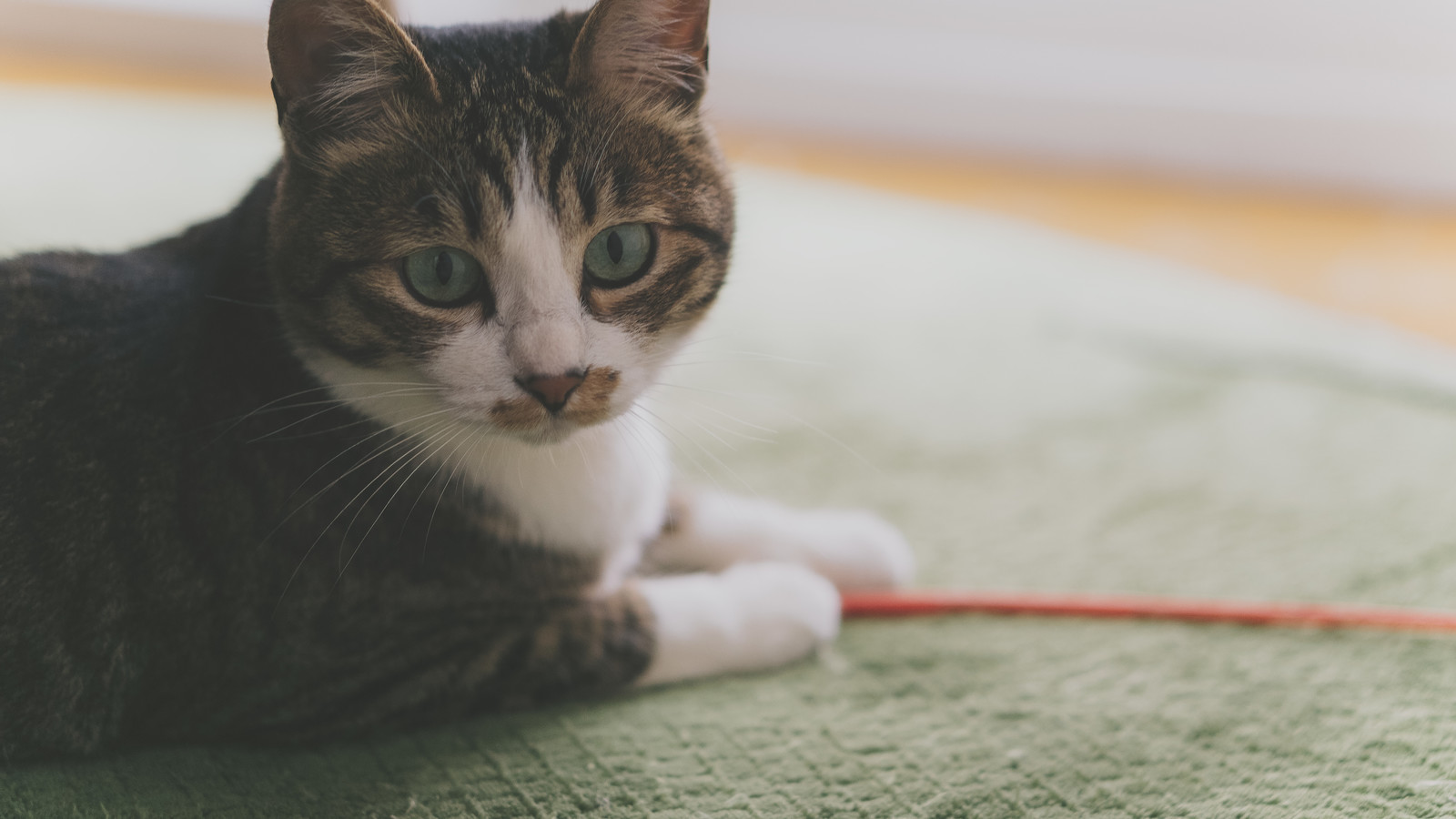 「忙しいので後にしてもらえますか(猫)」の写真