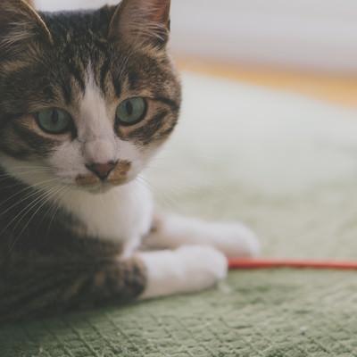 忙しいので後にしてもらえますか(猫)の写真