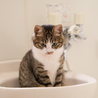 お風呂を嫌がり警戒するにゃんこの写真