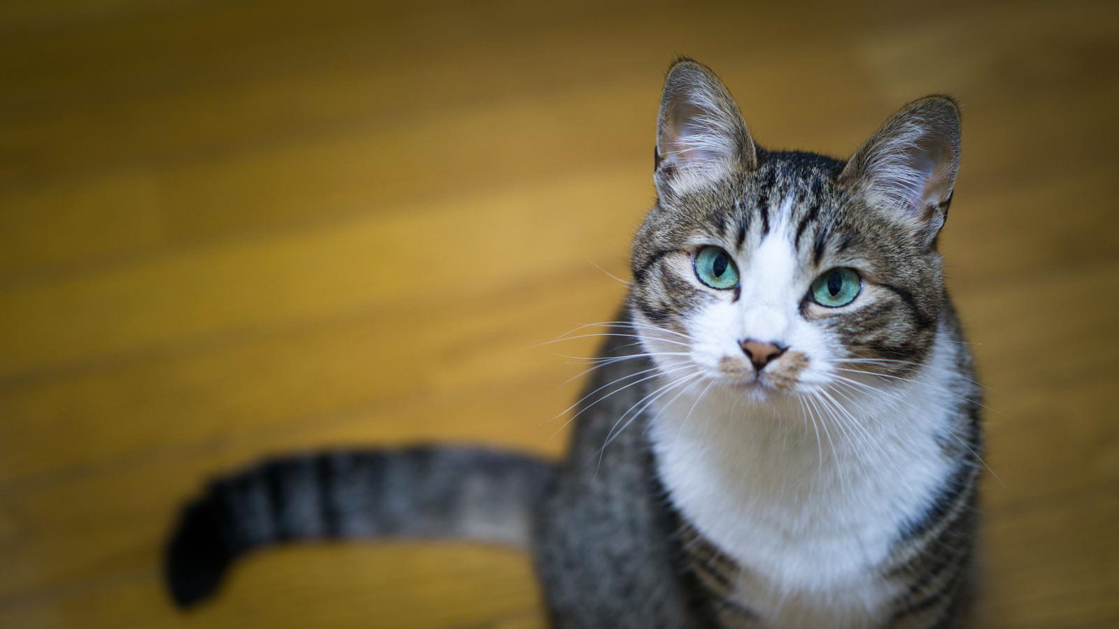 「何言ってんだこいつ(猫)」の写真