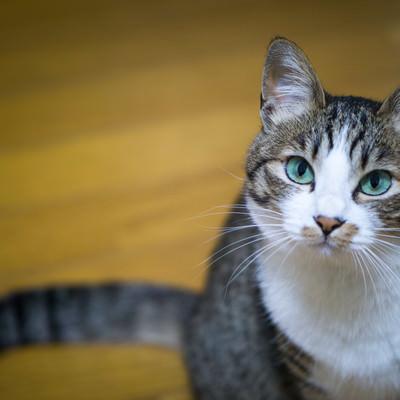 「何言ってんだこいつ(猫)」の写真素材