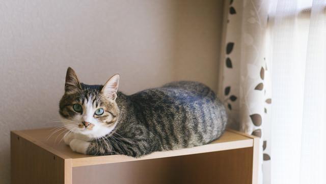 写真写りを気にする猫の写真