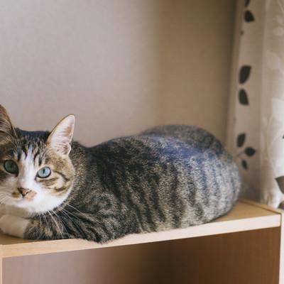 「写真写りを気にする猫」の写真素材