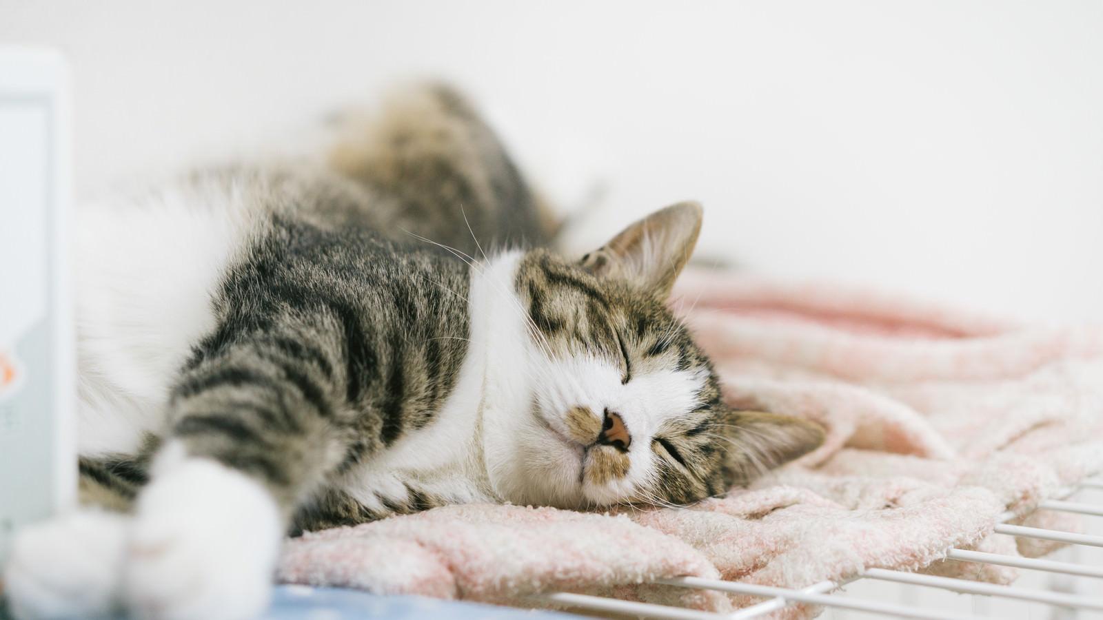 「猫の寝顔」