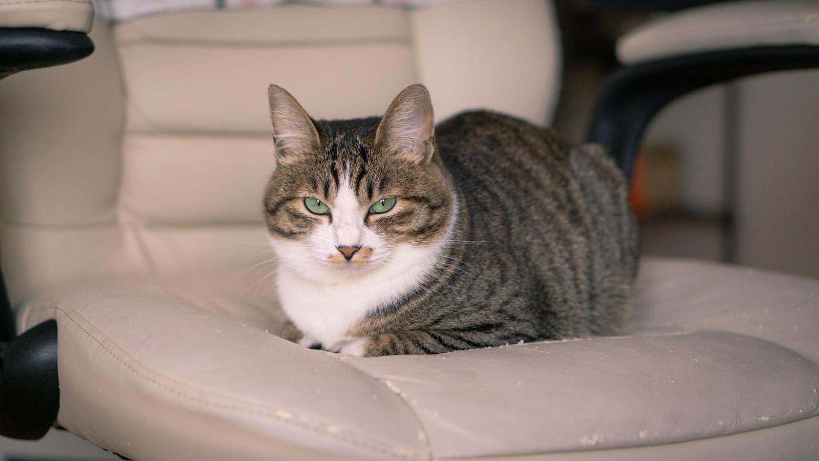 「ここはどかんぞ(猫)」の写真