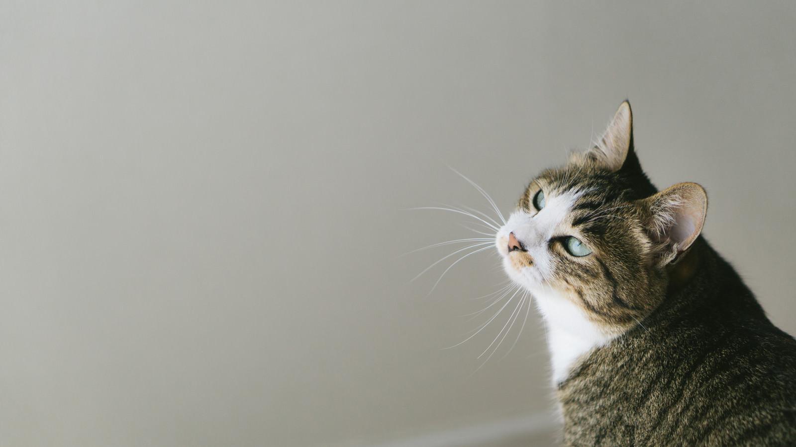 「呆れた猫」の写真