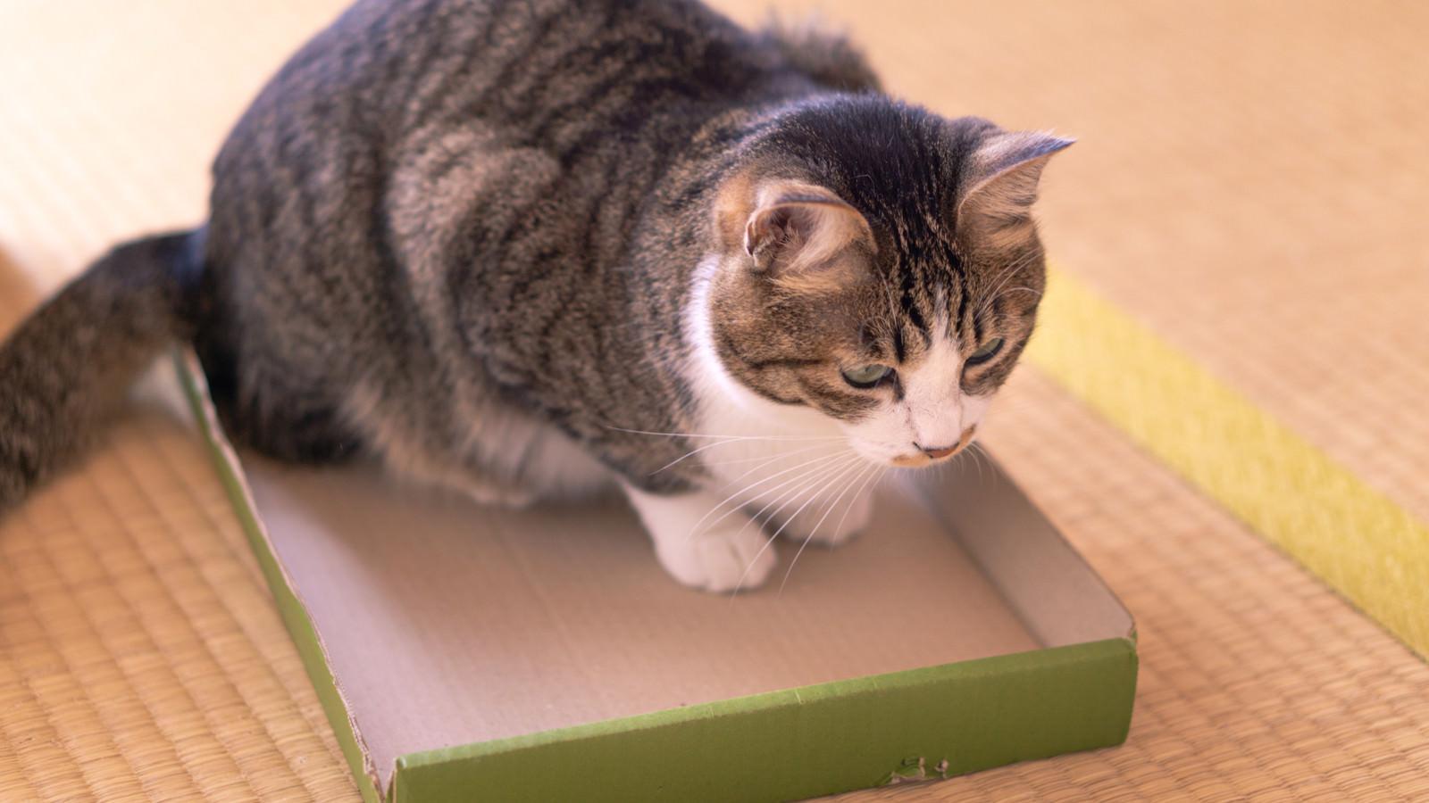 「収納されたかった猫」の写真