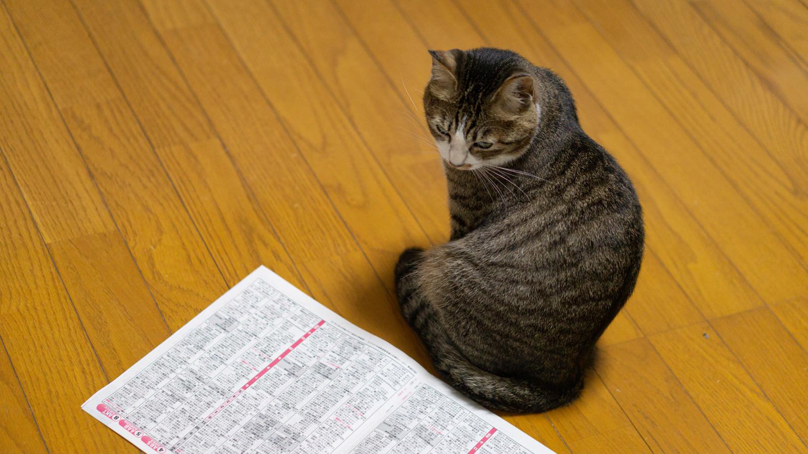 「特番が見れなかった猫」の写真
