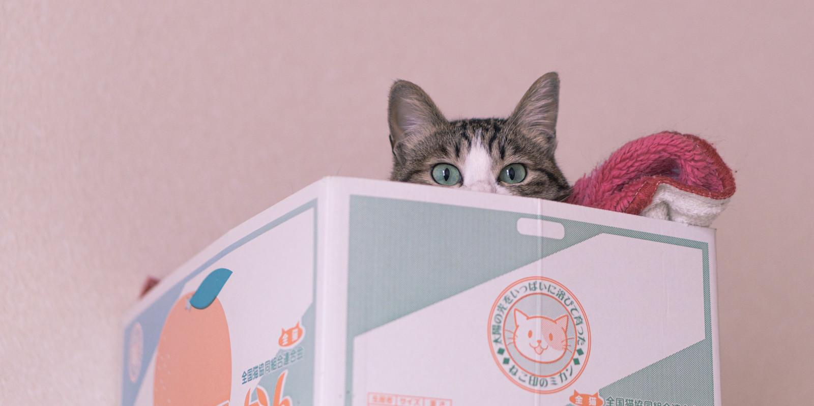 「ダンボールからこんにちは(猫)」の写真