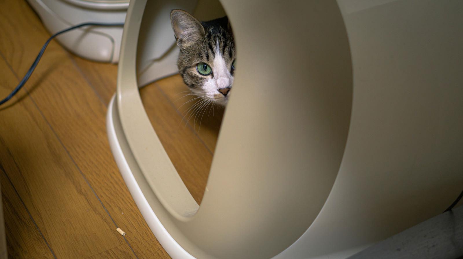 「目撃する猫」の写真