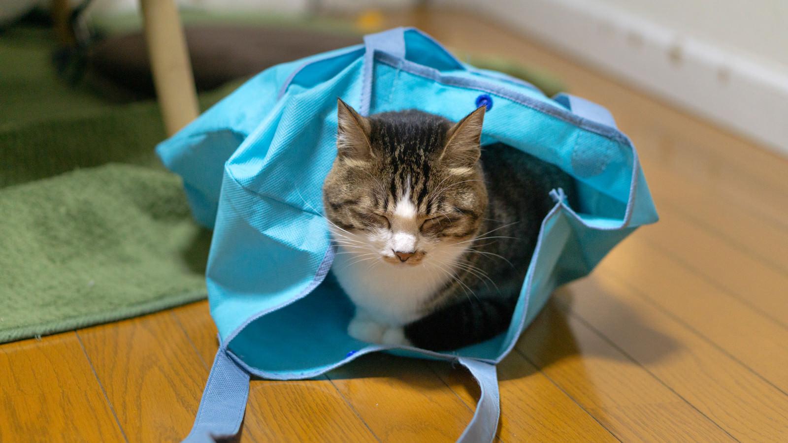 「袋の中で寝落ちする猫」の写真