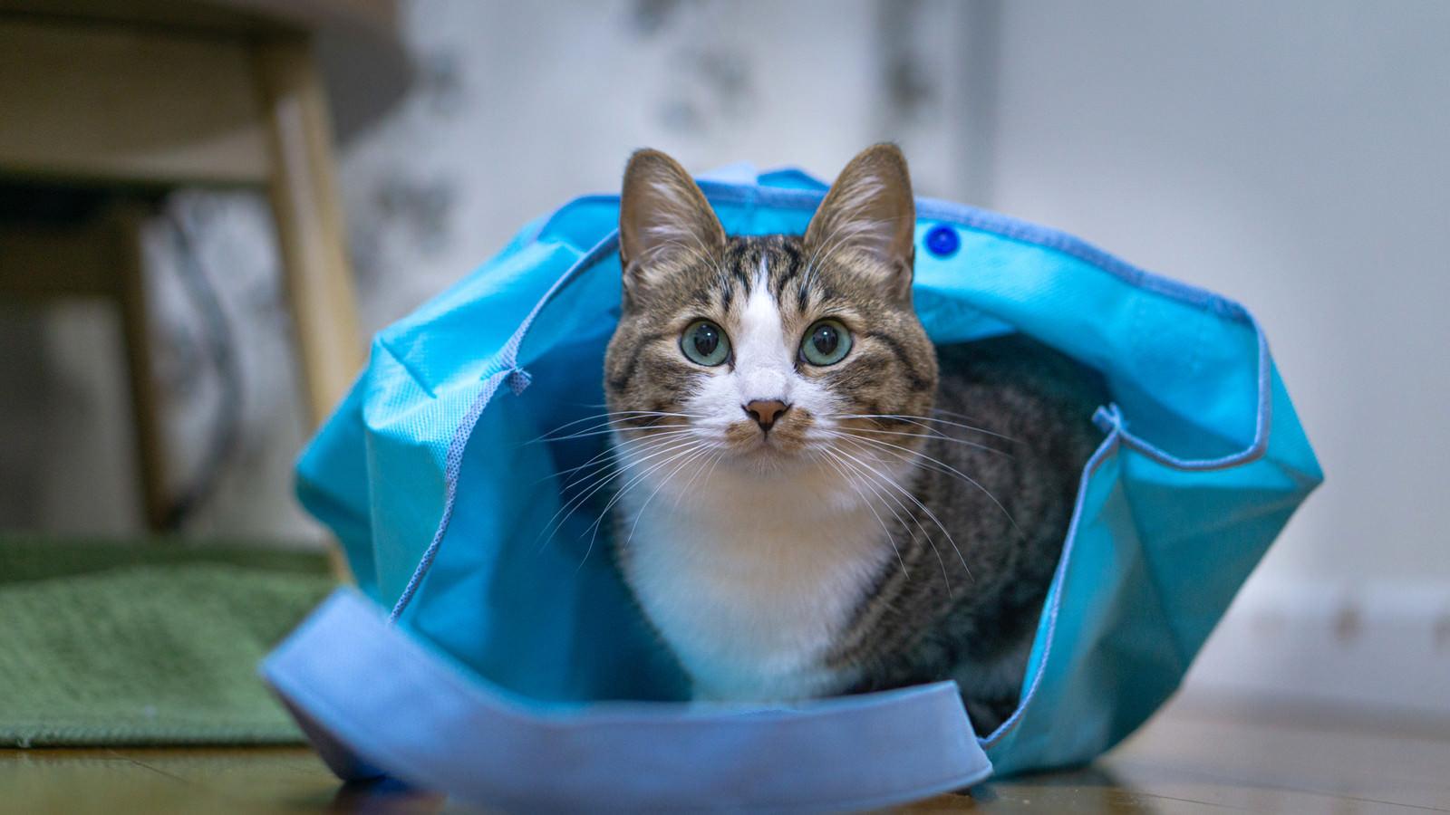 「お持ち帰り猫」の写真