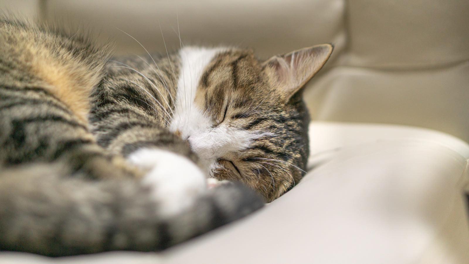 「夢の中の猫」の写真