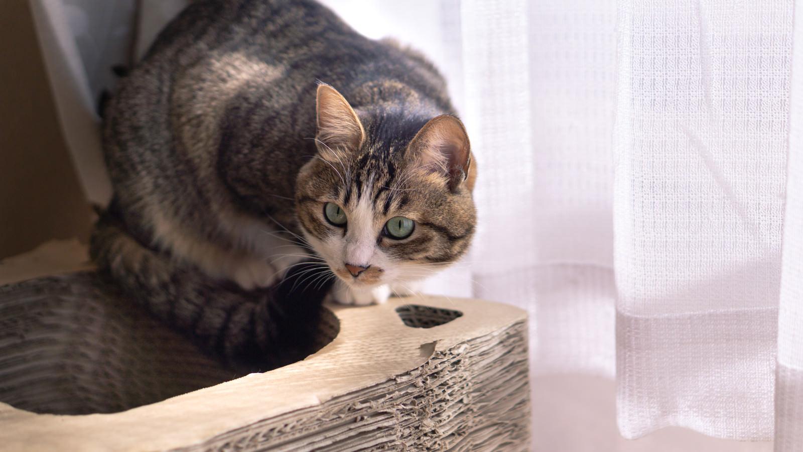 「そろそろ活動はじめようかな猫」の写真