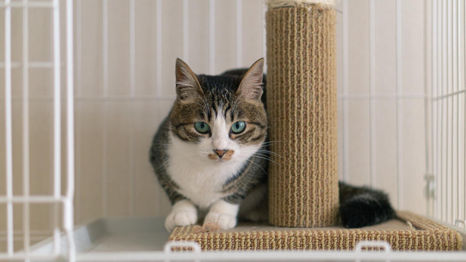 「こちらの様子をうかがう猫」の写真