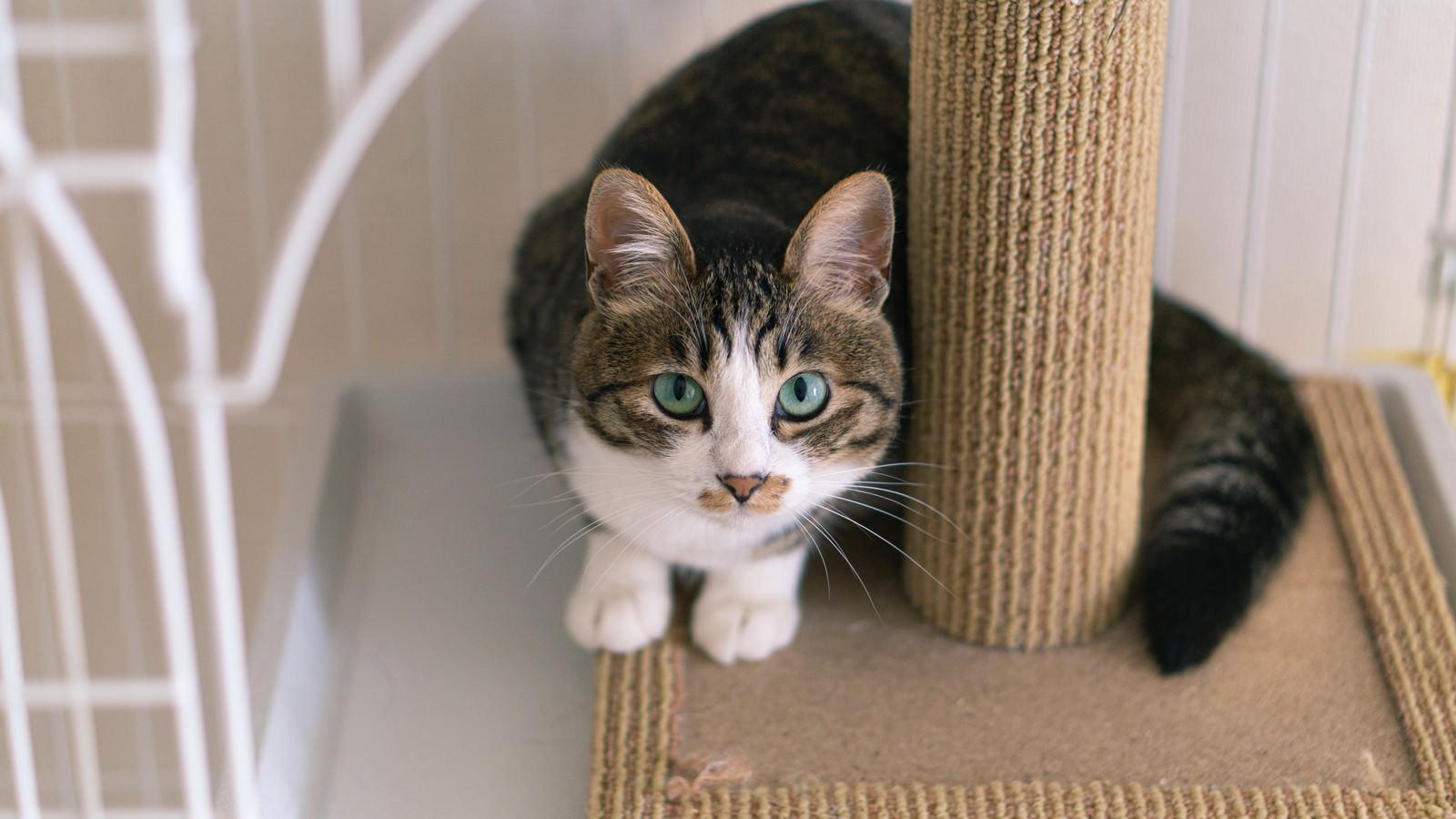 「前足を揃えて見上げる猫」の写真